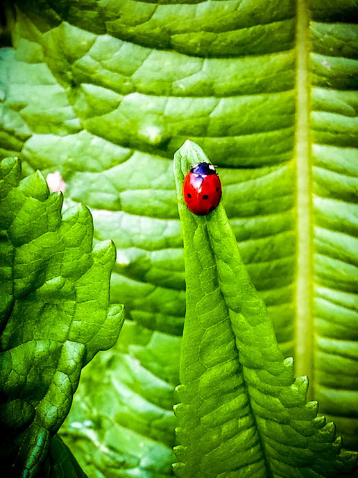 Lady Bug by Peter Dowell